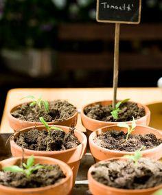 Plants, Garden, Garten, Gardens, Planters, Plant, Tuin, Planting, Yard