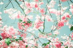 Think Spring when you think of the colors in Shabby Chic decor. Just beautiful!