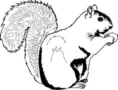 squirrel outline holding nut - Google Search   Sisterhood ...
