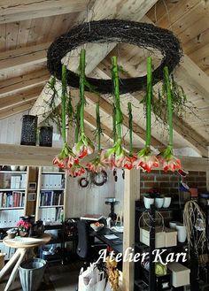 Atelier Kari natuurlijke decoraties en kransen: Amaryllis plafonds.