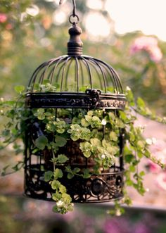 ideas for hanging bird cage decor wedding Birdcage Planter, Birdcage Decor, Hanging Bird Cage, Deco Nature, Flower Planters, Garden Planters, Dream Garden, Garden Projects, Garden Inspiration