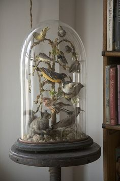 Taxidermied Birds Under Bell Jar~From the Collection of Ryan Cohn, Artist, New York City by astropop, via Flickr