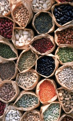 Beans: Great For Your Parrots: Beans For Parrots? Yes!
