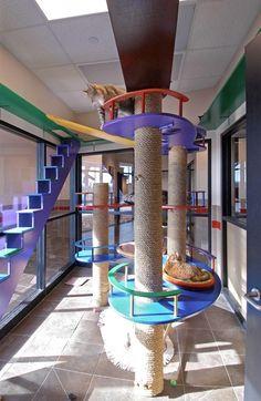 #PetSupplies Cat Room Ideas | If I do a cat room? | PET IDEAS & CRAFTS