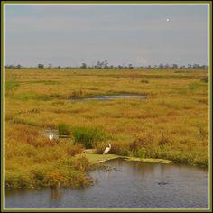 Bayou Photo Louisiana Swamp | Louisiana bayou scenery Swamp | Flickr - Photo Sharing!