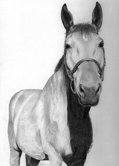 Custom equine portrait of Lander University Equestrian Center Horse.  Click on link for more information about ordering your own custom pet portrait. Perfect gift for the pet lover or horse lover.