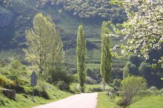 Travel in northern spain was a research area for dream bouncing the novel