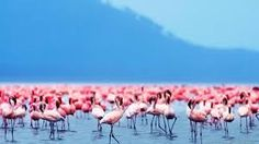 Image result for flamingos tumblr