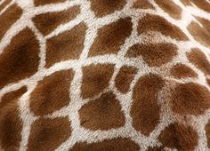 giraffe skin.jpg (640×463)