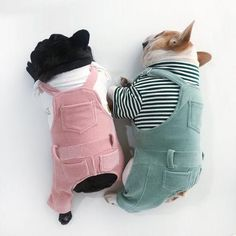 Dog Apparel Pastel Color Painter Bid Overall Dungarees Shirt Clothes Outfit Cowboy Overalls Classic Pet Cat Puppy Vintage Clothes Blue Jeans - Pampered Pets Fox Dog, Dog Cat, Boy Dog Clothes, Small Dog Clothes, Dog Clothing, Boy Outfits, Cute Dog Outfits, Puppy Outfits, Pet Fashion