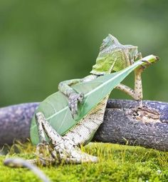 Hey lovely lady, let me strum a tune on my leaf for you, wink