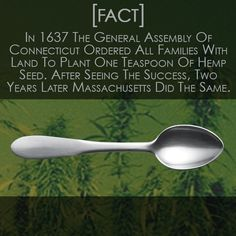 In 1637 #Connecticut Knew What's Up. That Was Almost 400 Years Ago, Where Did It Go Wrong? #Hemp #PureHemp #HempLife