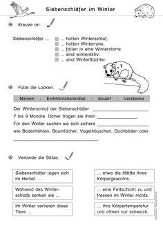 """kostenloses Arbeitsblatt für den Sachunterricht in der Grundschule zum Thema """"Tiere im Winter"""" (Winterschlaf des Siebenschläfers)"""