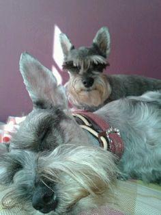 Zaskia & Mini
