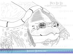 Grandmother Turtle is patiently waiting to colored and bring a smile to your face. Don't worry she won't bite. Comes with two Coloring Pages (this picture and a close-up of her face) by Lisa Marie Ford available as an Instant Download for printing your own coloring pages via the DownontheFarmStudio Etsy Shop.