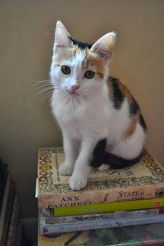 Itty Bitty Kitty likes books ViaMarta Rodríguez