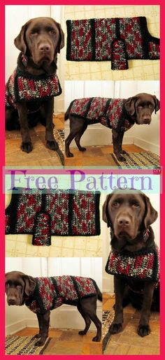 Dog Sweater - Free Patterns With the holidays so close and everyone excited, don't leave your dog out on the fun! Why not make him a Crocheted Dog Sweater for a great Christmas Crochet Dog Sweater Free Pattern, Dog Coat Pattern, Crochet Baby Cardigan, Crochet Coat, Baby Blanket Crochet, Free Crochet, Crochet Dog Clothes, Pet Coats, Christmas Crochet Blanket