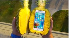 Can a Pineapple Protect iPhone 6s From Extreme 100 FT Drop Test? - GizmoSlip  Trending Now