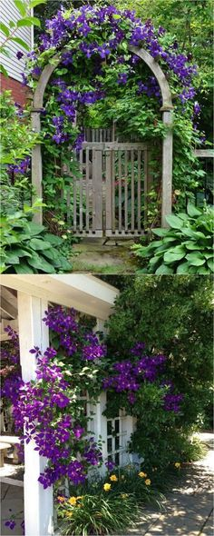 20+ favorite easy-to-grow fragrant flowering vines for year-round beauty. Plant them for an arbor, pergola or fence to create gorgeous outdoor rooms! #gardengates #site:backyardgarden.website