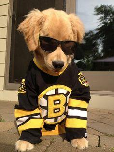 little Boston Bruins fan www.bestwestern.com/universityhotelbostonbrighton