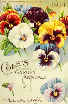 Cole's Garden Annual Pella, Iowa. 'Cole's Superb Mixture Pansy' Vintage flowers, turn of the century seed packet.
