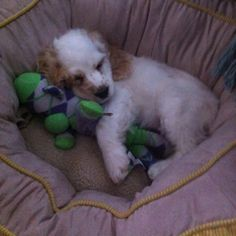 """""""leave me alone , I'm spooning my monkey"""" ~ Sully"""