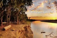 Luxury safaris to the lagoons and alluvial floodplains of Luangwa, a fantastic safari & birding destination with 450 bird species and abundant game. Game Lodge, Viewing Wildlife, Luxury Holidays, Bird Species, Lodges, Safari, Africa, Country Roads, Camping