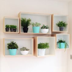 Faux and real mixing it up in bloomingville display boxes. My own 'living wall' in the kitchen