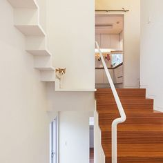Last in our roundup of architecture for cats is this house which allows the cat to survey the comings and goings of its owners. Appearing at first glance to be a long and elaborate shelf, the feline-width staircase inside the home by OBBA winds up above the main entrance and stairs. If you enjoyed our roundup read more on dezeen.com/tag/houses #architecture #interiordesign #house #cat Photograph by Kyungsub Shin.