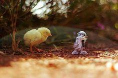 Stormtroopers unterwegs in der Natur – Star Wars Abenteuer von Zahir Batin - detailverliebt.de