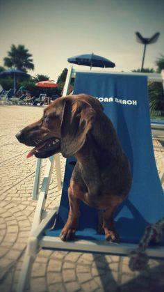 Morosita!! La nostra mascotte! Doggy Village by African Beach