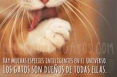 Citas de gatos