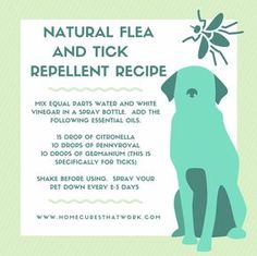 DIY Pest Control Like human medications popular dog medications, such as flea and tick& Flea And Tick Spray, Flea Spray, Dog Care Tips, Pet Care, Flea Remedies, Natural Remedies, Ticks Remedies, Essential Oils Dogs, Medication For Dogs