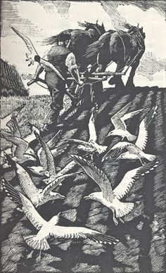 seagulls and plough, woodcut by C.F.Tunnicliffe