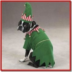 Christmas Pajamas for Dogs are so adorable!  See more at   http://www.squidoo.com/christmas-pajamas-outfits-for-dogs