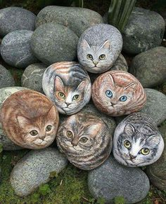 Painted Stone art : cats
