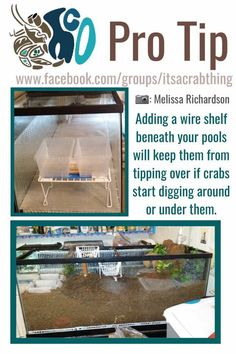 - World of Animals Hermit Crab Cage, Hermit Crab Homes, Hermit Crab Habitat, Hermit Crabs, Lizard Cage, Classroom Pets, Hamster Care, Reptile Room, Animal Room