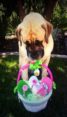 TFlipinista® perfect for Easter! Oliver thinks so too! @Flipinista Your BFF (Best Flip Flop)® Your BFF (Best Flip Flop)®  info@Flipinista.com or call 312.399.2468