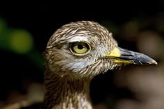 Bioparc Birds (part I)   valencia bioparc