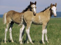 Twins Horse Markings Horse Wallpaper Animal Wallpaper Horse Love Animals Beautiful