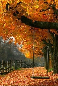 Swing in an autumn tree