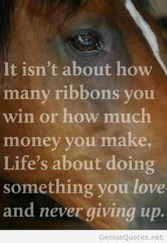 Horse wallpaper quote pic new