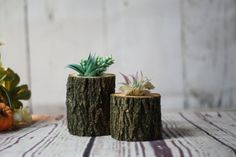 Wood Succulent Holder Log planter Natural Wood by GFTWoodcraft