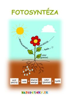 Fotosyntéza - pracovný list Spring Activities, Activities For Kids, Elementary Science, Jar, Teacher, Education, Professor, Children Activities, Glass