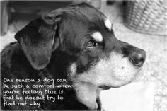 Best Collection of Inspirational Dog Image Quotes and Sayings Pictures. Dog is useful pet/animal which is very close friend of men. Dog Image Quotes and Sayings pictures help us to define Dog characteristic which is common in all Dogs and make liberal with human being as a pets.