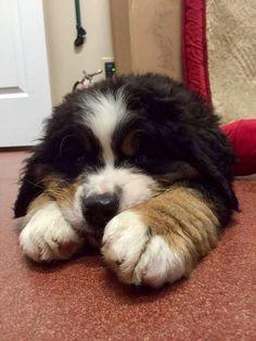 Big puppy paws!  ♡♡♡
