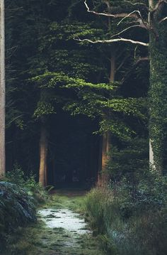 I need my trees... #trees #explore #forest