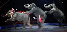 PETITION, PLEASE SIGN AND SHARE! Justice for Ringling Bros. Elephants Locked in Boxcars for Four Days!