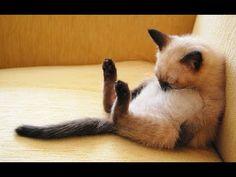 Los Gatos más Chistosos y Extraños - Gatos graciosos - Gatos divertidos - Gatitos raros - YouTube