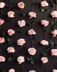Image via We Heart It https://weheartit.com/entry/139329904/via/5531376 #background #black #flower #flowerwallpaper #flowers #green #pink #wallpaper #flowerbackground #flowersbackground #amorrrr #flowerswallpaper